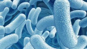 Probiotics Dermatitis