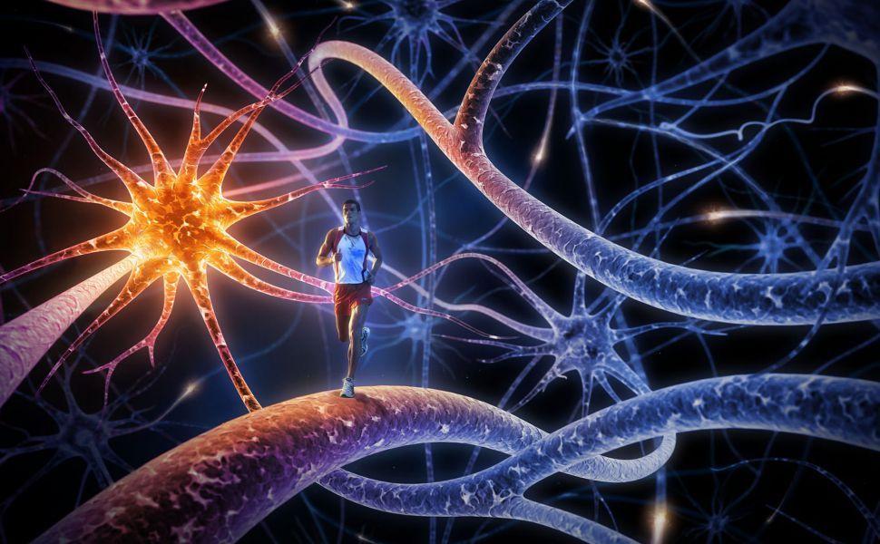 folic acid benefits for brain