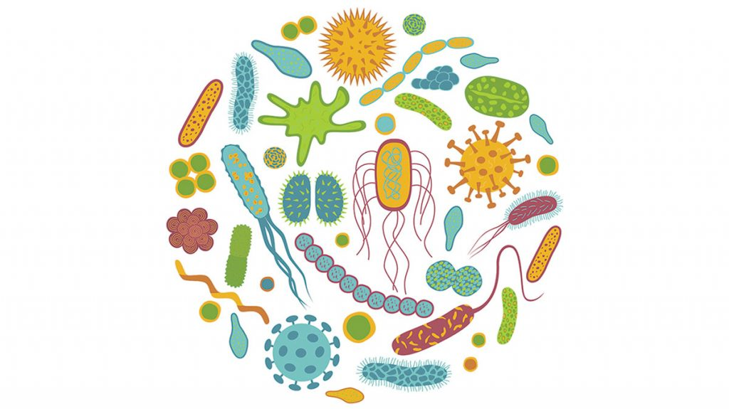 probiotics and anxiety