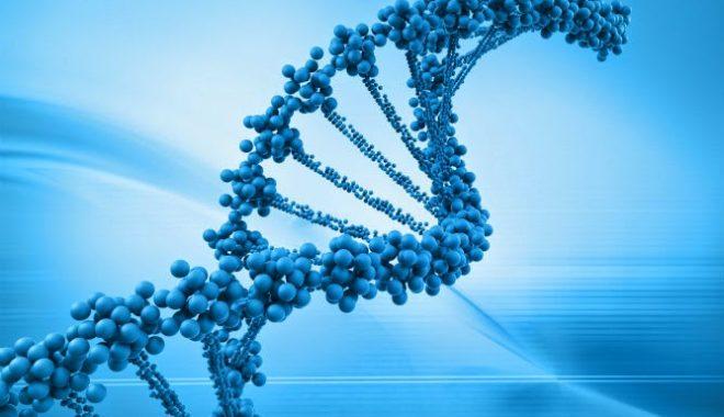 dna test genealogy
